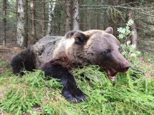 Hanbjörn 104kg.