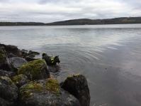 """Taigas tredje älg bjöd på ett uppfriskande dopp i Navarn. Min kära vän """"Knorten"""" fällde denna dag sin första älg, en kalv, och med gemensamma krafter fällde vi även kon som gick i sjön."""