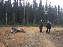 Linus och Petra med tjur för Scott